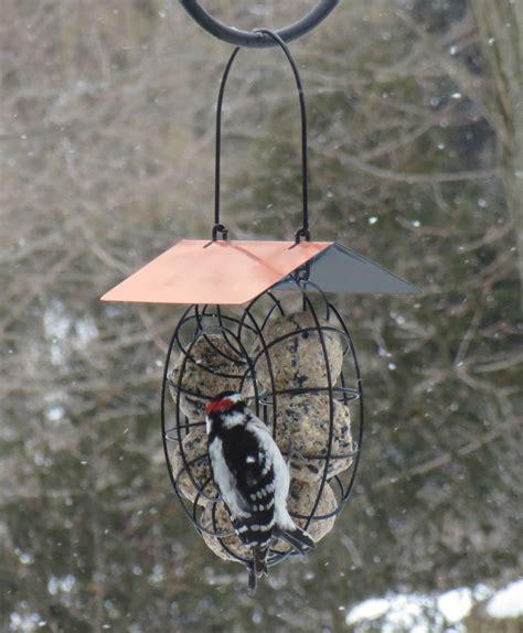 circle suet seed ball bird feeder