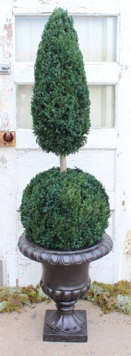 Preserved Ball Cone Topiary - 50 Real Preserved Juniper
