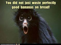 images  animal captions  pinterest funny
