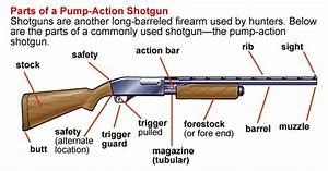What Are The Different Parts Of The Shotgun  For Example The