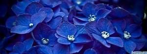 flowers blue hydrangeas Facebook Cover timeline photo ...