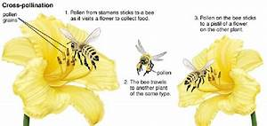 Flower Structure And Pollination