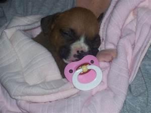 Newborn Baby P Puppies Images - Litle Pups