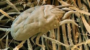 Was Machen Milben : nicht nur im kuscheligen heim auch hier lauern milben ~ Lizthompson.info Haus und Dekorationen