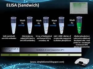 Sandwich Elisa Process