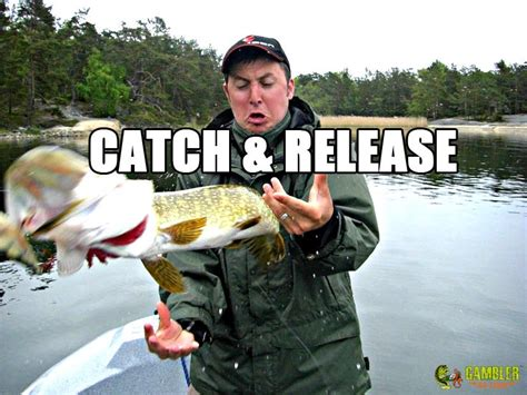 Fly Fishing Meme - catch fishing memes pinterest