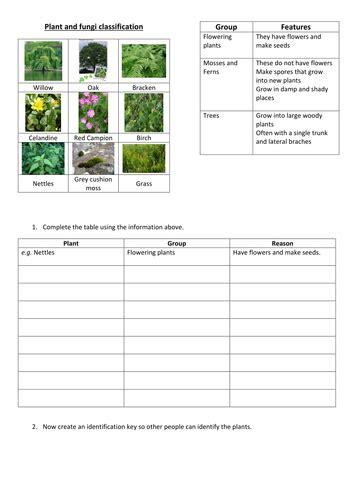 plant classification by fjefferies123 teaching resources tes