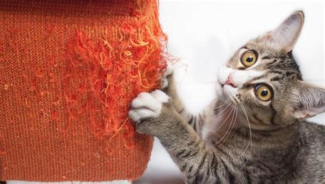 reduce separation anxiety  cats cattime