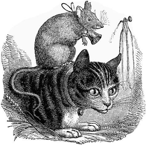 inter species interactions  fancy rat