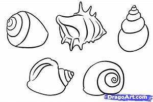 How to Draw Shells, Step by Step, Stuff, Pop Culture, FREE ...