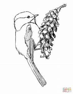 Carolina Chickadee Coloring Page Free Printable Coloring