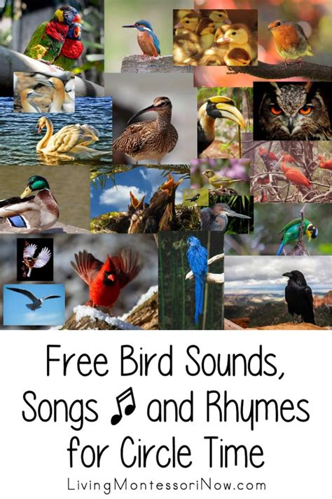 free bird sounds songs and rhymes for circle time 543 | Free Bird Sounds Songs and Rhymes for Circle Time