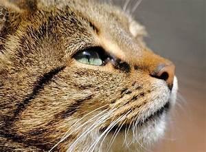 Comment Savoir Si Mon Ordinateur Est Surveillé : comment savoir si mon chat est malade 9 tapes ~ Medecine-chirurgie-esthetiques.com Avis de Voitures