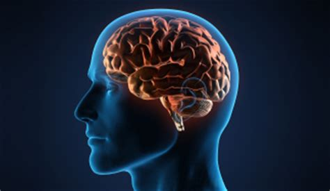 overview institute  brain disorders  neural