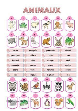 animaux dictionnaire visuel fiches de francais school