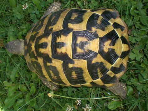 tortues tortue terrestre tortue margin 233 e autres