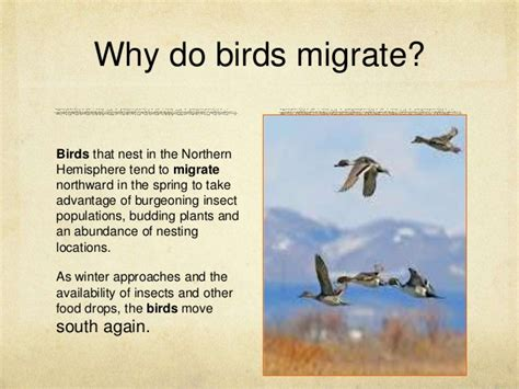 effect of climate change on migration of birds a