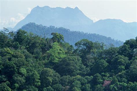 ระบบนิเวศป่าไม้
