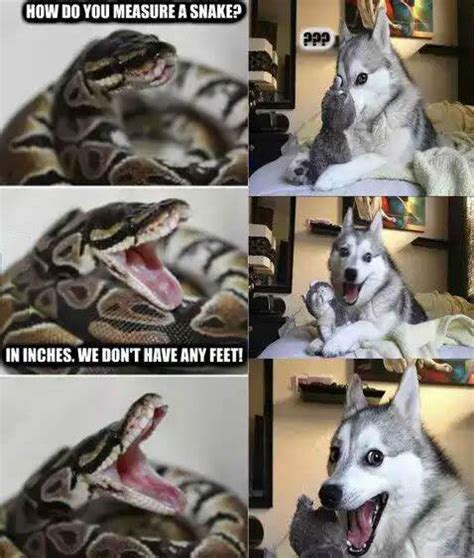 Dog Pun Meme - pun dog and pun snake justpost virtually entertaining