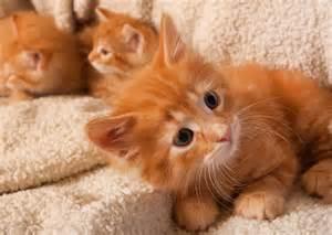 cat names for orange cats kalamazoo animal rescue marmalade kittens
