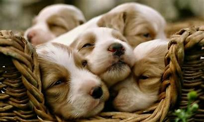 1080p Wallpapers Puppy Dogs