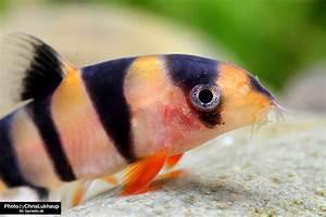 Was Fressen Schnecken : schneckenfresser im aquarium schnecken blog garnelen onlineshop ~ Orissabook.com Haus und Dekorationen