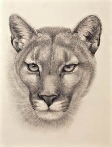 Animal Pencil Drawings