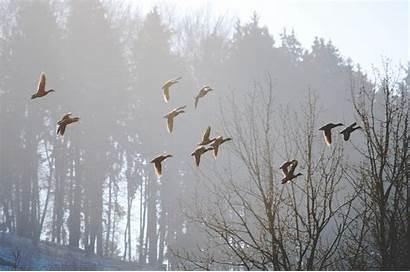 Spring Nature Birds Morning Fog Wallpapers Animals