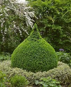 Buchsbaum Schablone Kaufen : buchsbaum rund schneiden buchsbaum mit schablone schneiden mein sch ner garten buchsbaum ~ Watch28wear.com Haus und Dekorationen