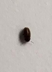 Ameisen Im Haus Ursache : welche kleinen k fer sind das insekten ungeziefer ~ A.2002-acura-tl-radio.info Haus und Dekorationen
