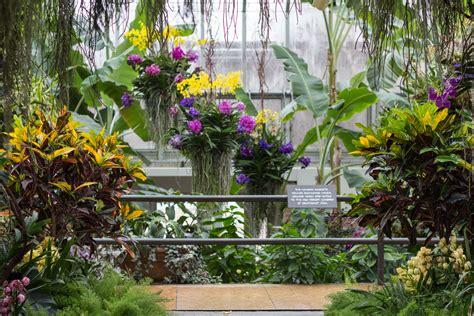 botanical gardens orchid show chicago botanic garden orchid show