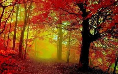 Autumn Desktop Woods Fall Backgrounds Wallpapers Background