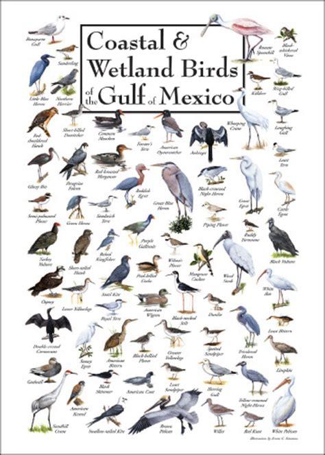 waterfowl regulations