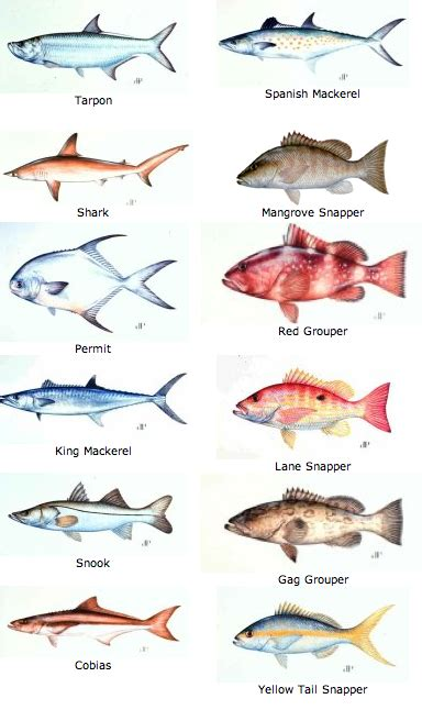 keys fish chart fishing tips  fishbox fish