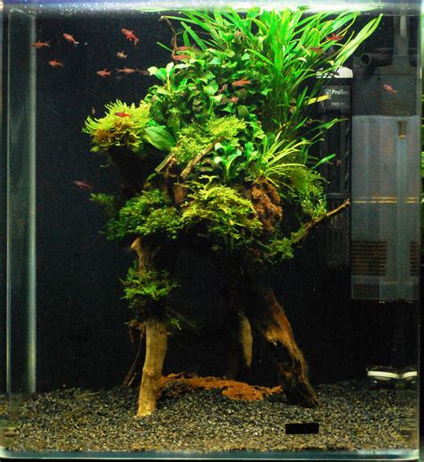 Aquascaping Forum - 60er cube mal anders by michael aquarienvorstellung