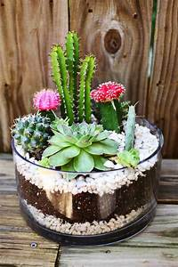 16, Simple, Yet, Beautiful, Diy, Cactus, Pots, That, Everyone, Can, Make