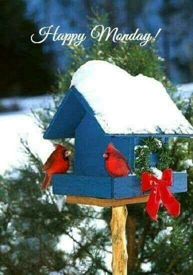 winter birdhouse monday quote pictures   images