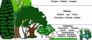 A Walk In The Woods - Ecology Lesson Plan