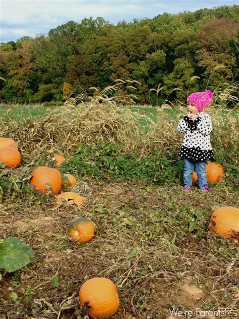 Pumpkin Patch Nj Chester by 10 Must Do Things At Paws Discovery Farm Mt Laurel Nj