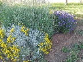 Lavendel Und Gräser by Zypressen Heiligenkraut Pflanzen F 252 R H 252 Bsche Farbtupfer Im
