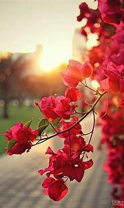 Mobiili taustakuvat HD   Wallpaper nature flowers, Flowers ...