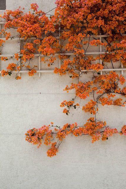 color   season inspire feeling fall orange
