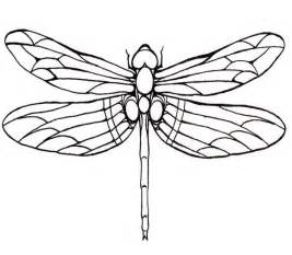 The 25  Best Dragonfly Wings Ideas On Pinterest