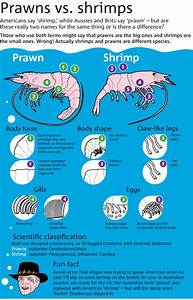 What is the difference between a prawn and a shrimp ...