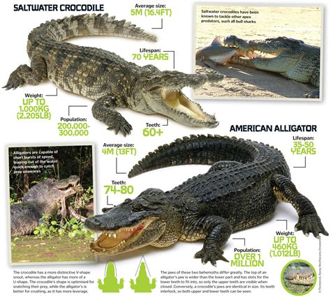 aligator cuisine s deadliest predators the lethal animals that can
