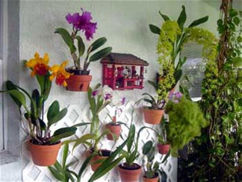 orchid lovers hang  pot