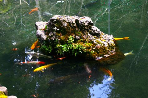 Japanese Aquascape by Aquascaping World Magazine Japanese Gardens And Aquascaping
