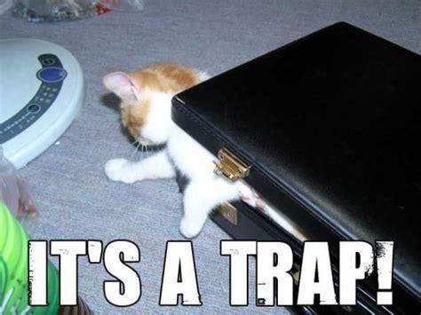 Cat Trap Meme - image 1390 it s a trap know your meme