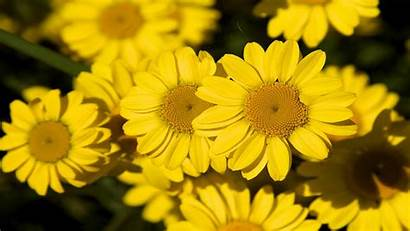 Ipad Flower Flowers Background Yellow Wallpapers13