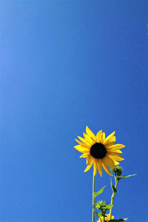 royal blue art minimalist nature photography yellow